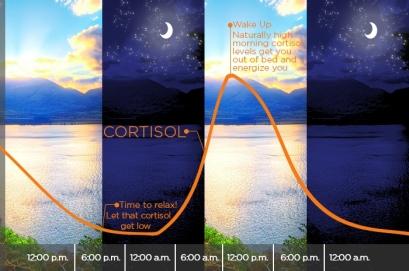 kortyzol_cykl dobowy