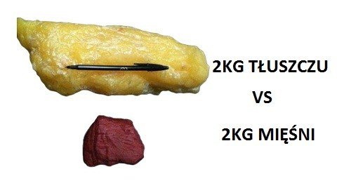 tłuszcz i mięśnie